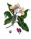 Indian Ocean / Southeast Asia: A clove plant, Burnett, 1842